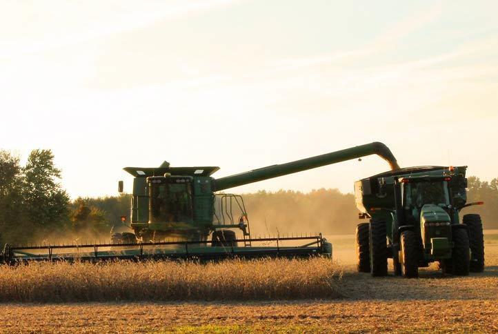 Mietitura grano, mietitrebbia in azione