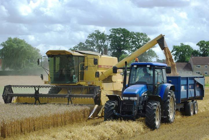 mietitrebbia in azione campo di grano - servizi prestazioni meccaniche valle bruna