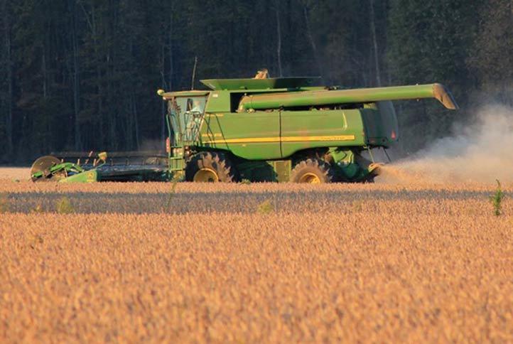 Raccolta grano - Servizio di prestazioni meccaniche Cooperativa Valle Bruna